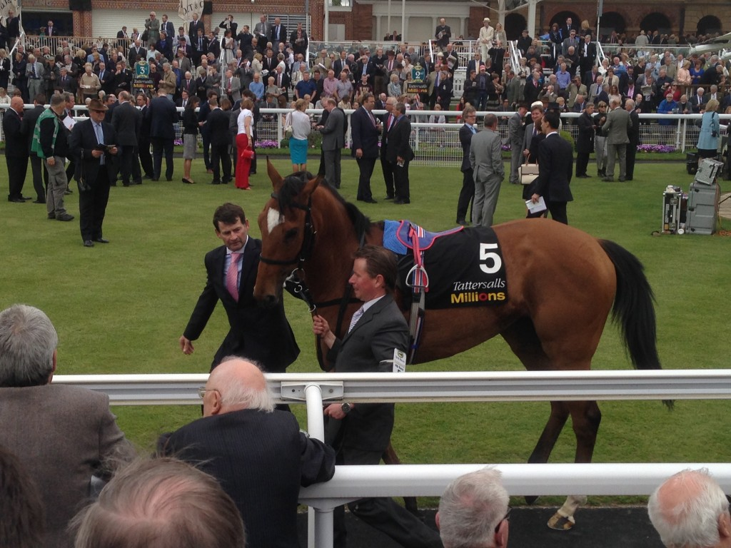 Musidora Stakes winner Star Of Seville in the parade ring.